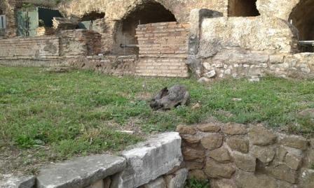 Rabbit - Imperial Fora
