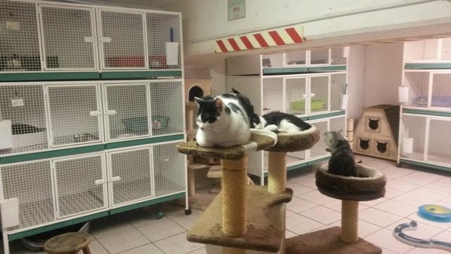 Gatti nella colonia felina