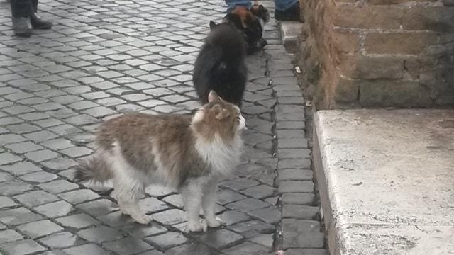 Gatti liberi a Largo di Torre Argentina