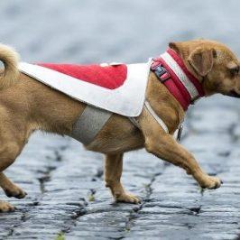 Il cane Briciola mascotte dei carabinieri