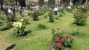 Quando visitare Roma: il roseto comunale in Primavera
